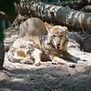 21 05-16 Chaffee Zoo 0499