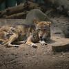 21 05-16 Chaffee Zoo 0512