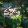 21 05-16 Chaffee Zoo 0509