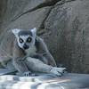 21 05-16 Chaffee Zoo 0519