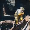 21 04-18 Chaffee Zoo 0216