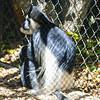 21 04-18 Chaffee Zoo 0220