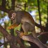 21 04-18 Chaffee Zoo 0209