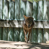 21 04-18 Chaffee Zoo 0186