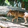 21 04-18 Chaffee Zoo 0192