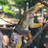 21 04-18 Chaffee Zoo 0207