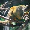 21 04-18 Chaffee Zoo 0215