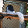21 04-18 Chaffee Zoo 0221