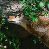 21 04-18 Chaffee Zoo 0195