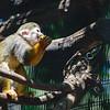 21 04-18 Chaffee Zoo 0217