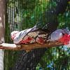 21 04-18 Chaffee Zoo 0205