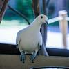 21 04-18 Chaffee Zoo 0203