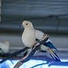 21 04-18 Chaffee Zoo 0202