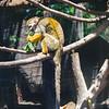 21 04-18 Chaffee Zoo 0211