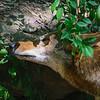 21 04-18 Chaffee Zoo 0195-1