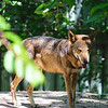 21 04-18 Chaffee Zoo 0196