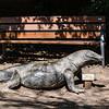 21 04-18 Chaffee Zoo 0200