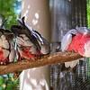21 04-18 Chaffee Zoo 0206