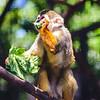 21 04-18 Chaffee Zoo 0208