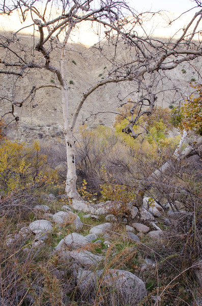 15 11-22 Canyon campground 0775