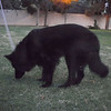 15 10-07 Wookie @ Riley Park 364