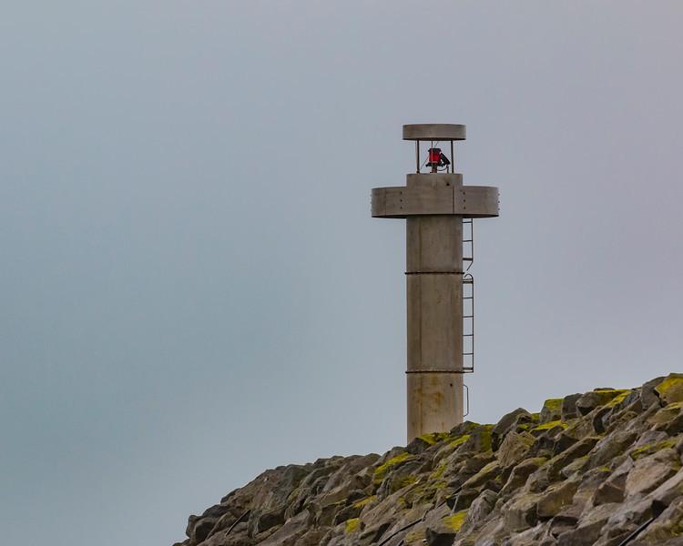 Iceland-Þórshöfn harbor red naviagtion light