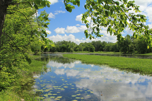 Petrie Island Park