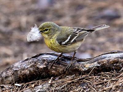 2016 Favorite Bird Pictures