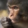 Monkey habitat in Kam Shan Country Park in Hong Kong