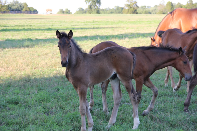 Colts at the Hanover Brand Farms between New Oxford and Gettysburg.  Aren't they beautiful?!