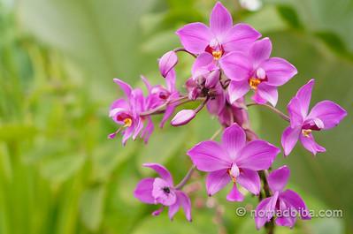 Orchids in Hotel Casa Luna, La Fortuna (Costa Rica)