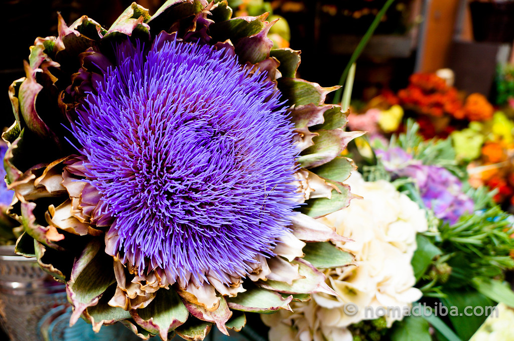 Flowering artichoke at a market in Bologna, Italy
