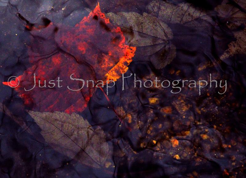 Leaf Under Water