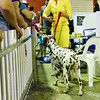 Dogs at The Ekka