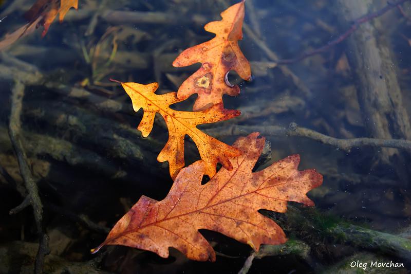 fall foliage-30