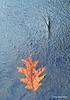 fall foliage-45