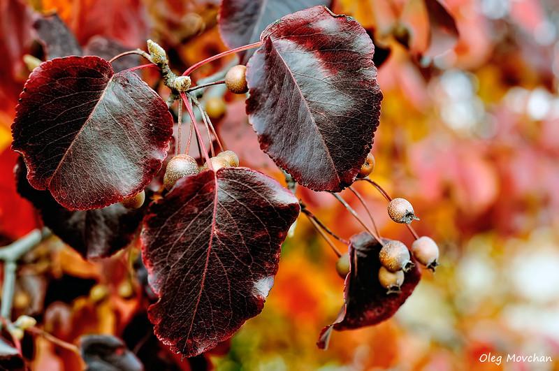 fall foliage-28