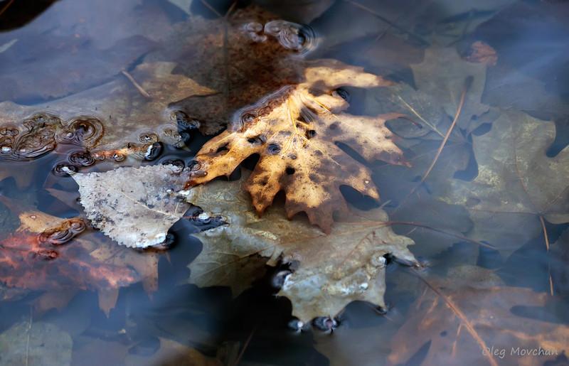 fall foliage-41