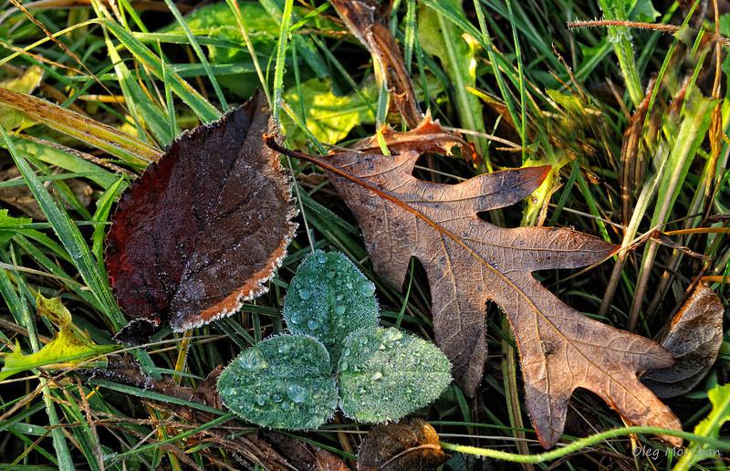 fall foliage-38
