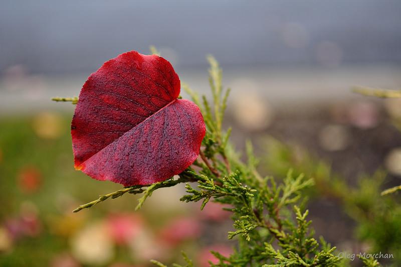 fall foliage-7