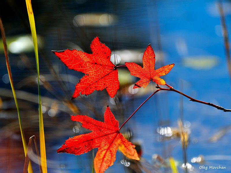 fall foliage-9