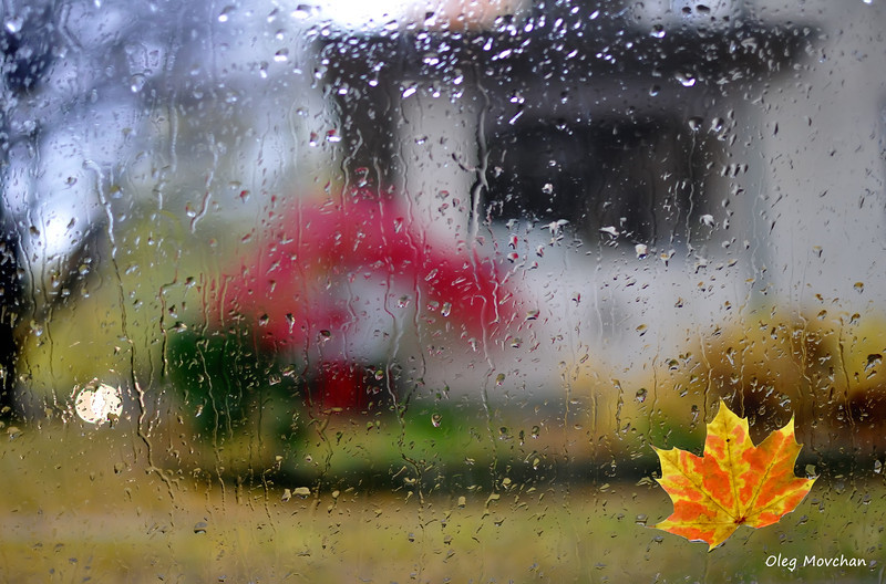 fall foliage-4