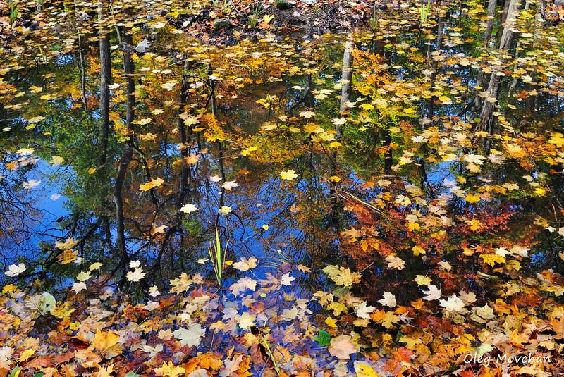 fall foliage-14