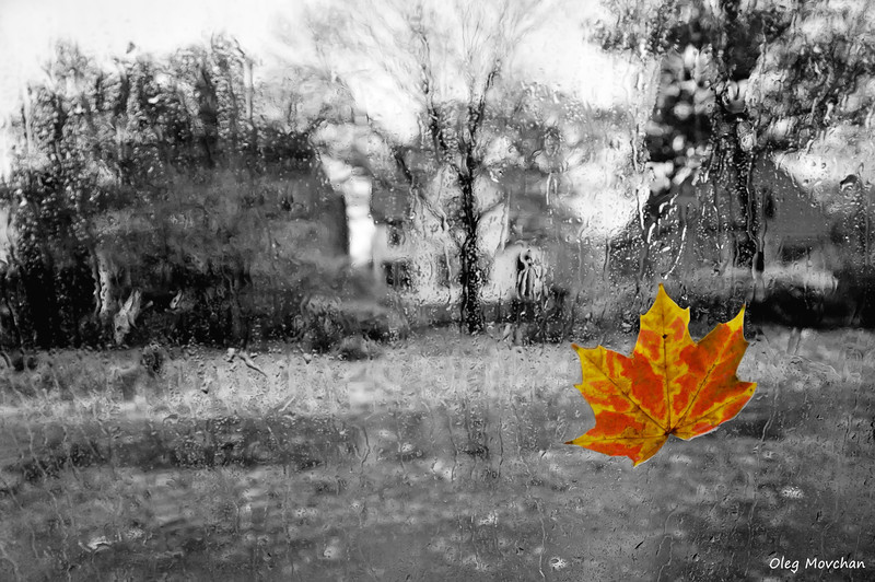fall foliage-3