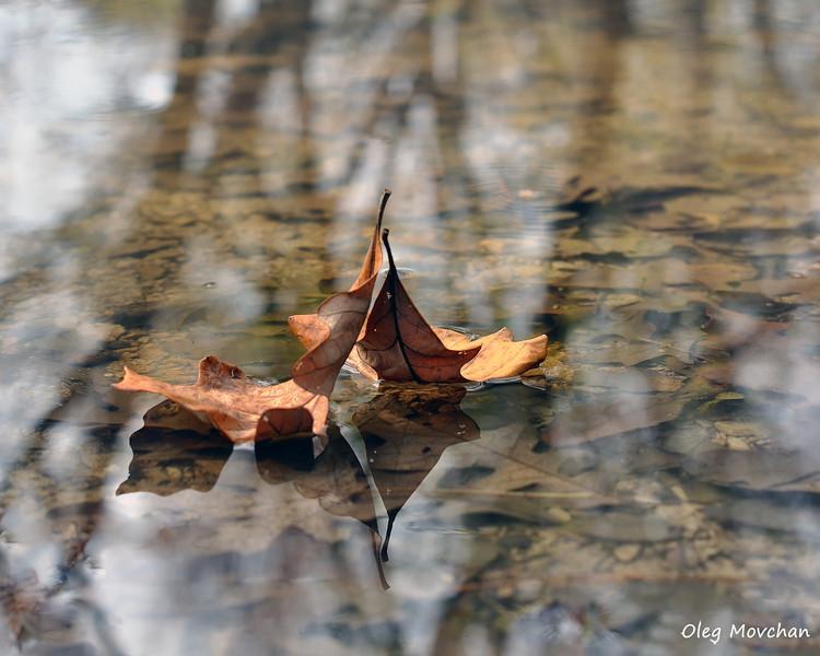 fall foliage-5