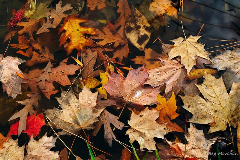 fall foliage-13