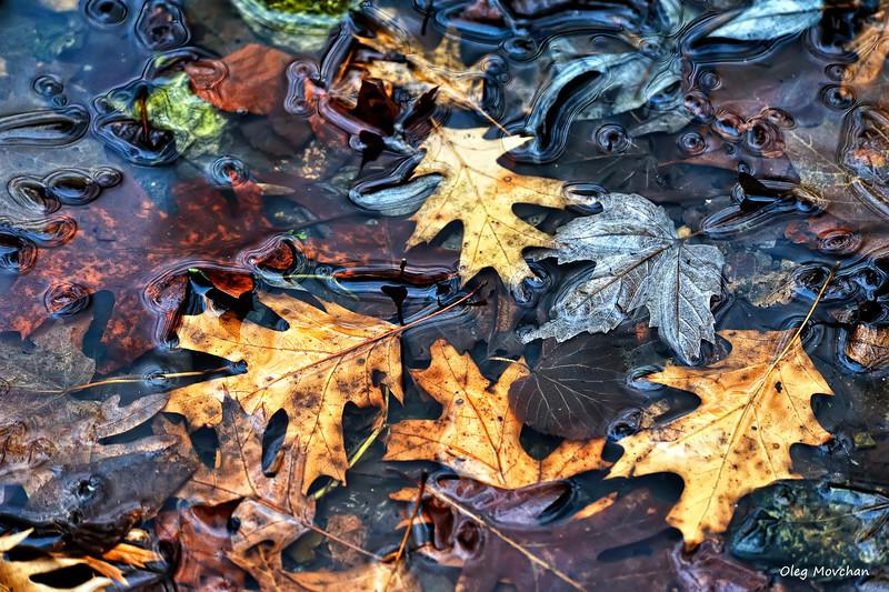 fall foliage-40