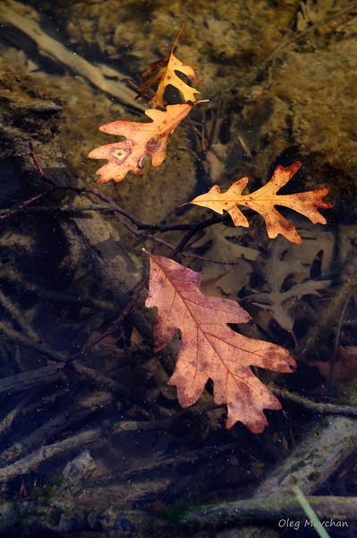 fall foliage-31