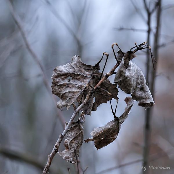 fall foliage-43