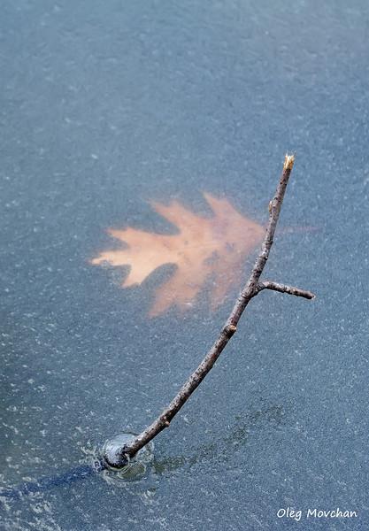fall foliage-44